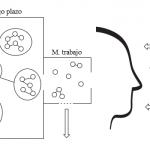 Relación entre pensamiento y aprendizaje